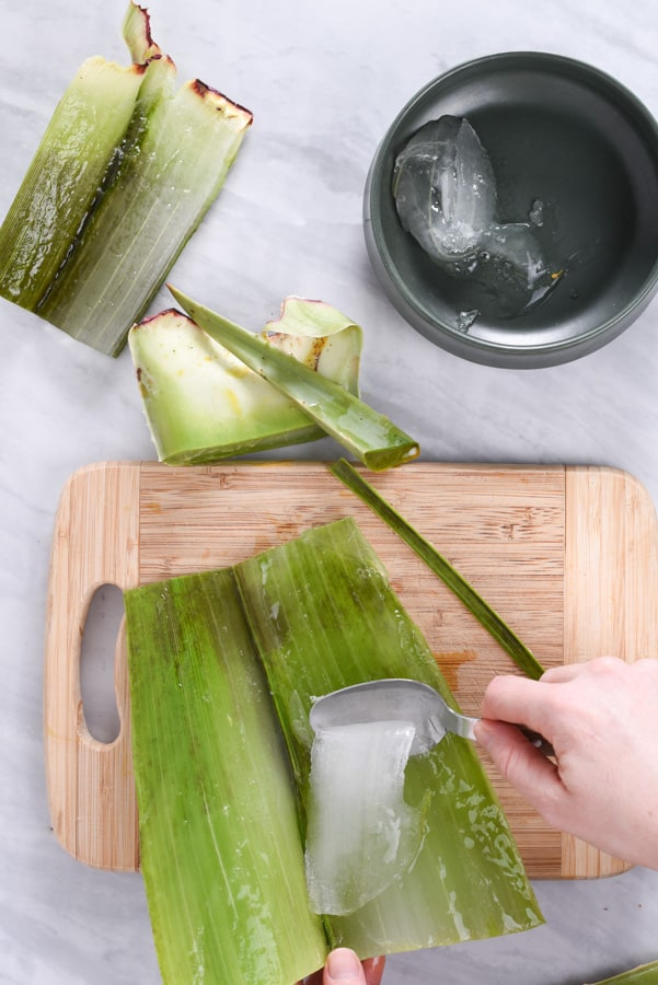 scraping fresh aloe vera with a spoon